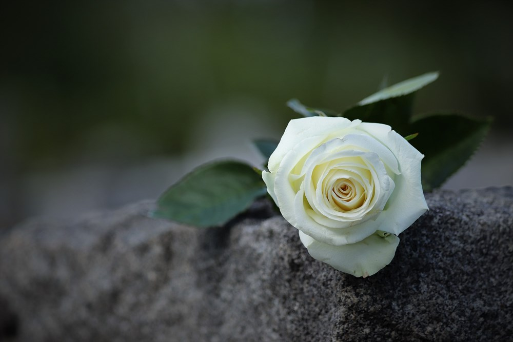 white-rose-4205736_1920.jpg